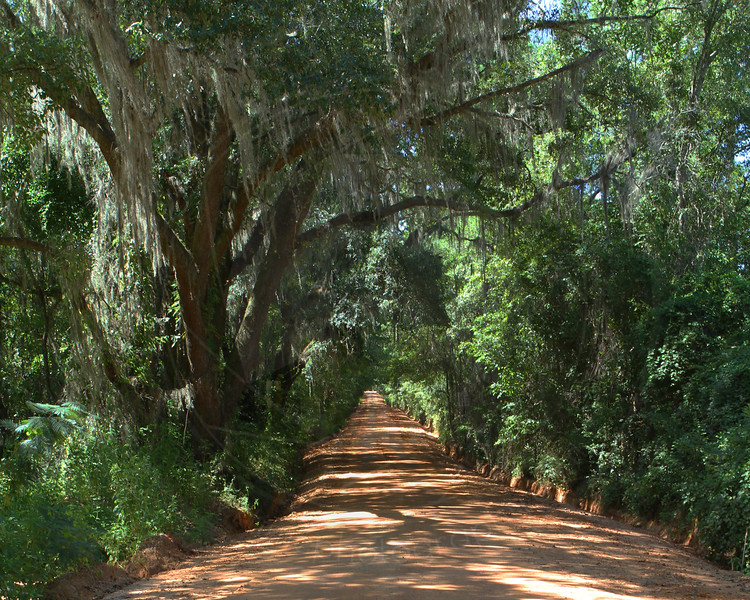 Red Dirt Canopy Road