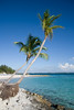 Two palm trees on a beautiful tropical shoreline of a small island.