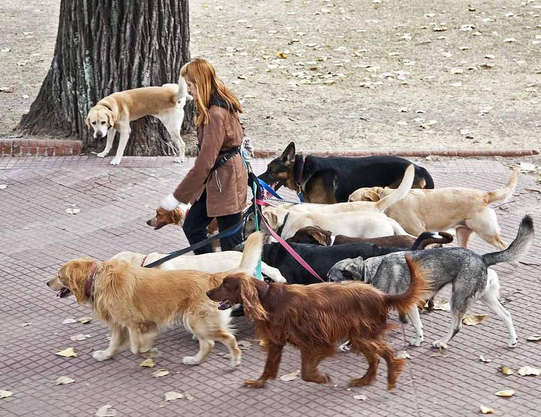 Dog Walker in Buenos Aires, Argentina.