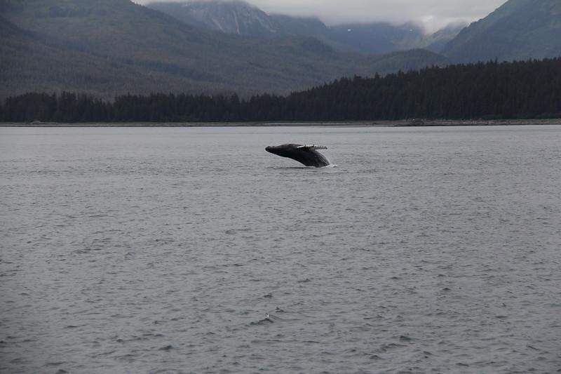 20160717-111 - WEX-Breaching Whale.JPG