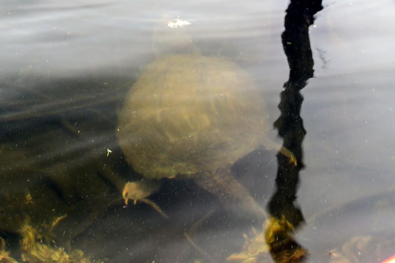 Monksville Reservoir-Monksville Reservoir Kayaking (35 of 38)-Edit-006.jpg