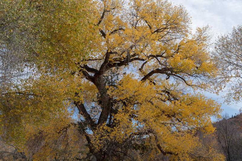 Sedonaa Thanksgiving Fall (17).jpg