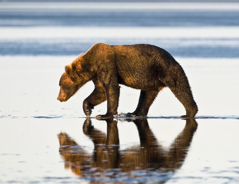 Bear Reflection.jpg