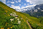 murren trail.jpg