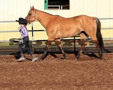 Horse Class Western Showmanship