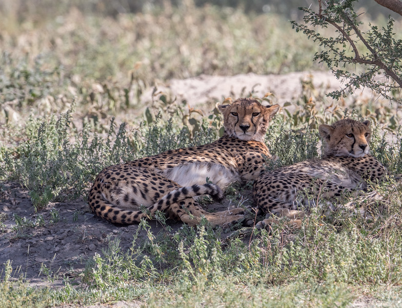 Tanzania_Feb_2018-47.jpg