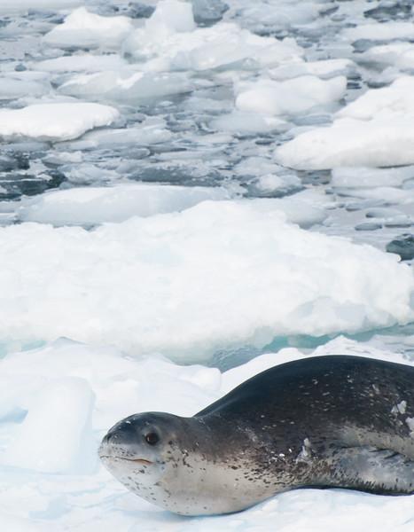 Antarctica 2015 (12 of 99).jpg