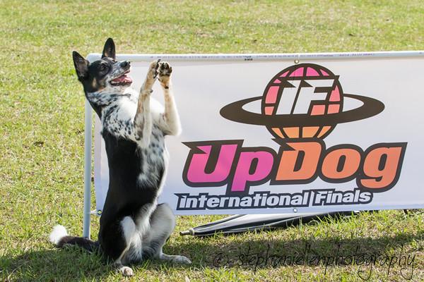 _MG_3373Up_dog_International_2016_StephaniellenPhotography.jpg