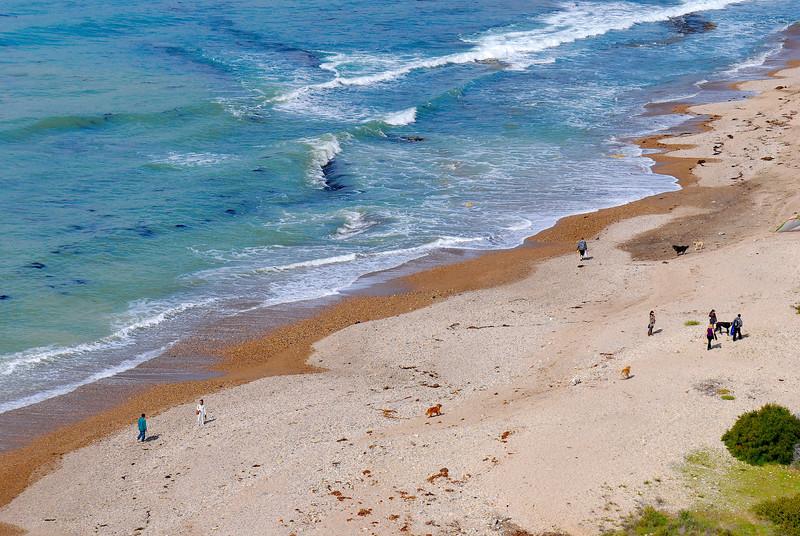 dogs_beach-002.jpg