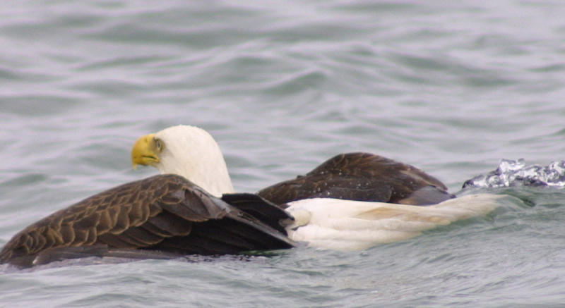 eagles from disc 029.jpg