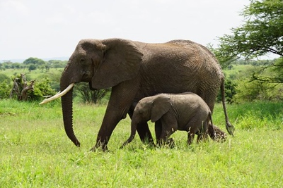 1494239971African-Safari-26.jpg