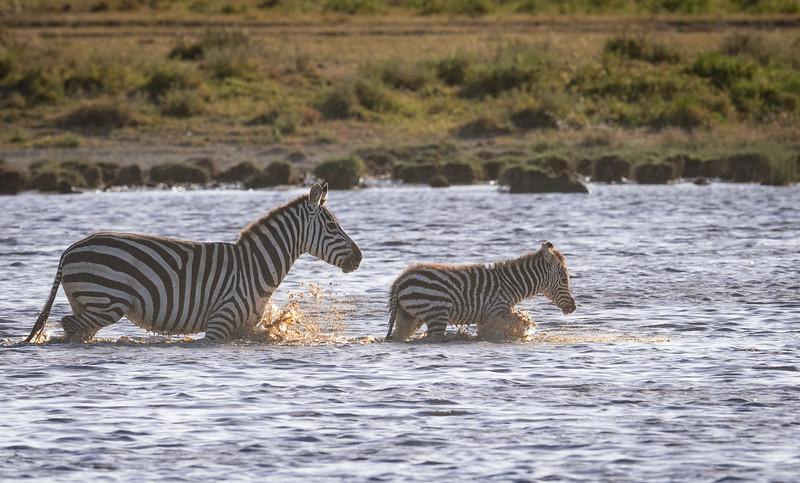 Tanzania_Feb_2018-355.jpg
