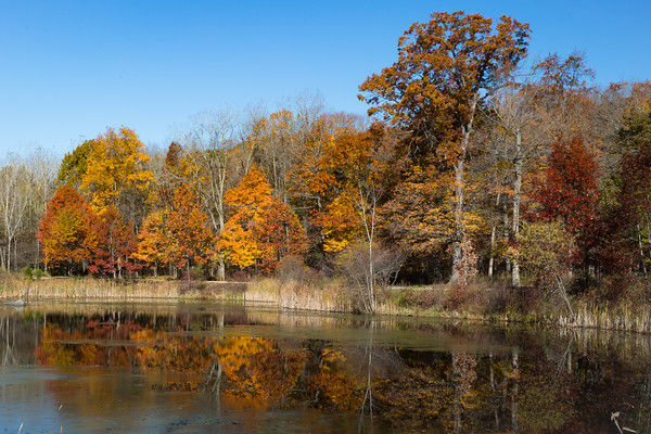 Fall Color 2015