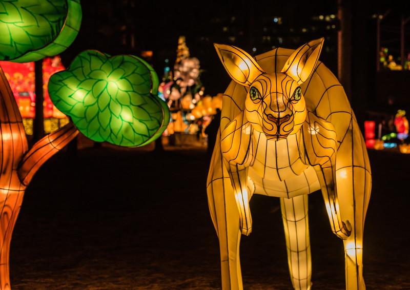 Chinese Lantern Festival-5317.jpg