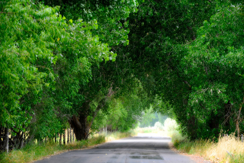 2011/8/15 – This is along the lower Provo River just a little east of Utah Lake. Back when I was a student at BYU in the early 80's I would park in this area and then wade into the Provo River to fish for a few hours. Lots of great memories. I love the tunnel made by the trees arching over the road on both sides. It looks so peaceful and dreamy.
