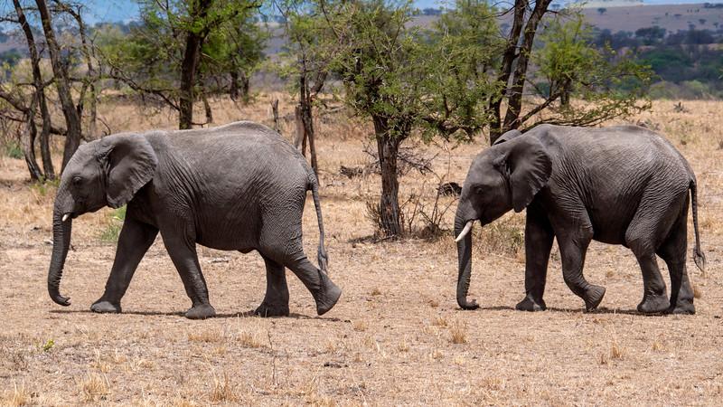 Tanzania-Serengeti-National-Park-Safari-Elephant-01.jpg