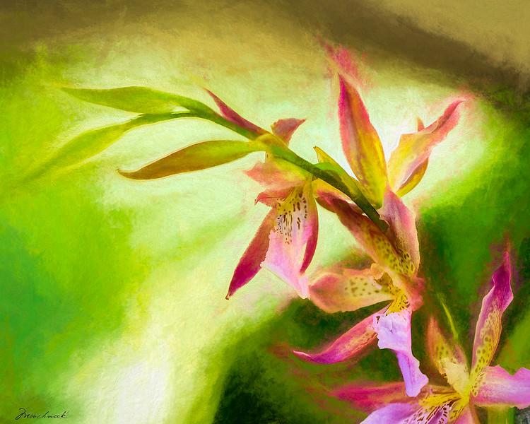Orchid_DSC8100Art-copy.jpg