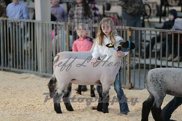 Wether Dam Show and Lamb Show