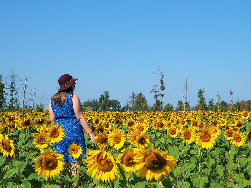 Prayers for Maria sunflower field