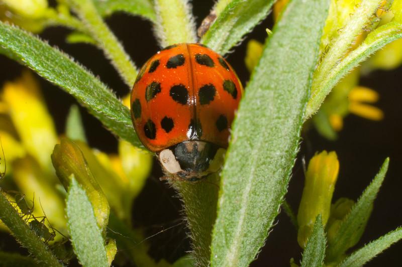Ladybug and others C9538.jpg