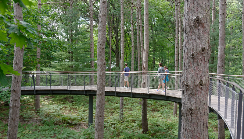 Dow Gardens - Whiting Forest Canopy Walk (5).jpg
