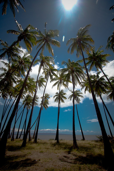 molokai palm trees 4.jpg