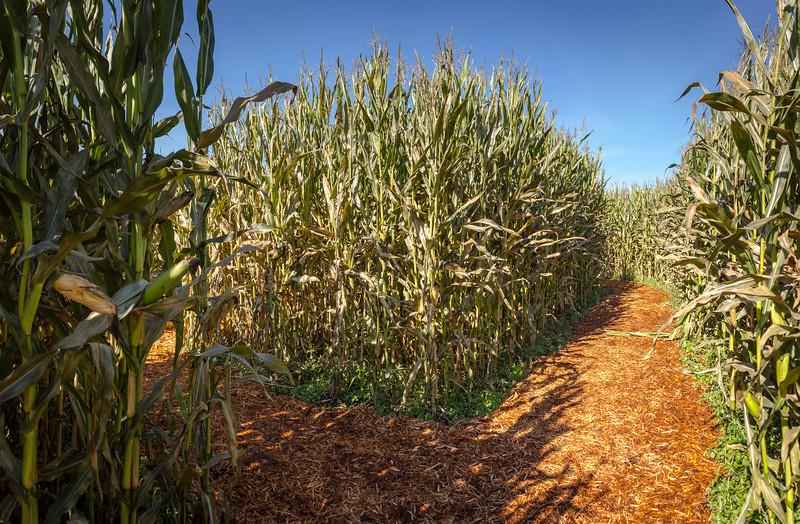 corn maze-1.jpg