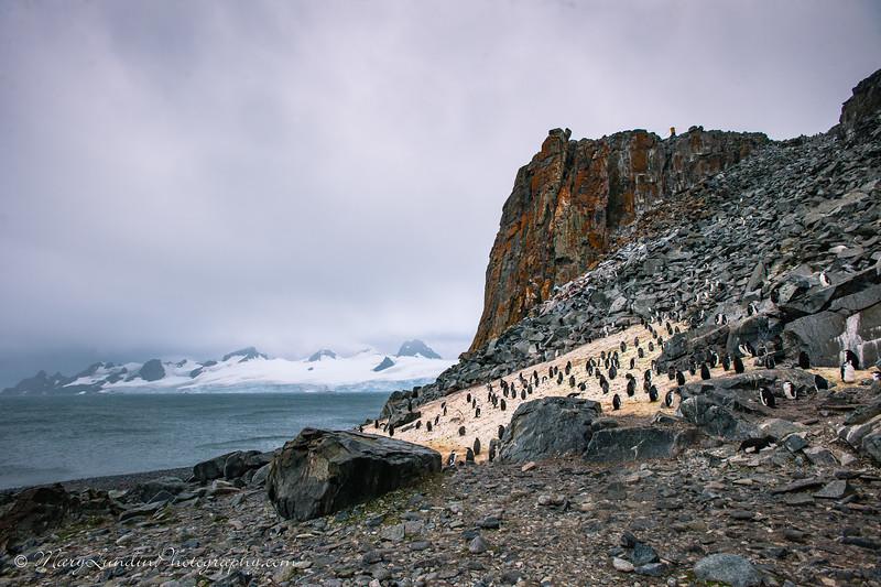 Antarctic-62