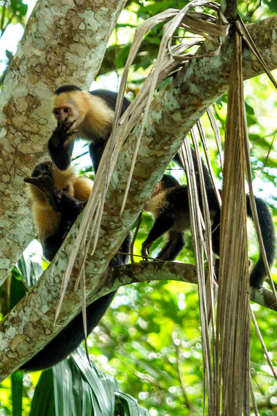 Costa Rica 2015-1582.jpg