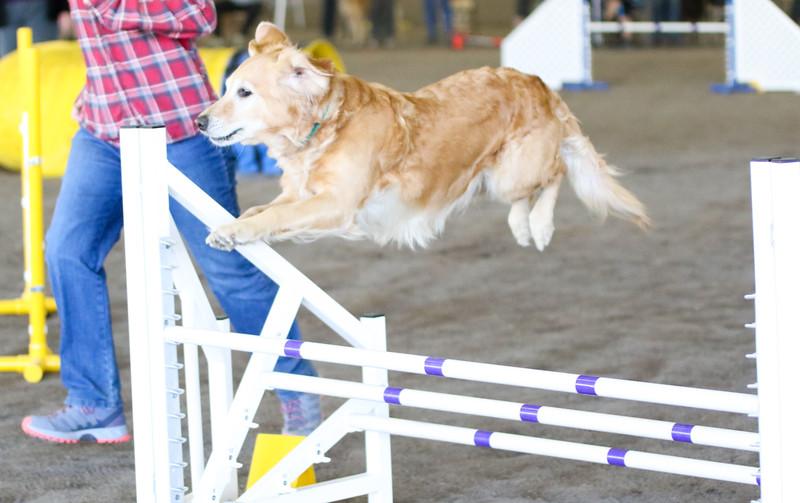 3-15-2015 Bloodhound-1545.jpg