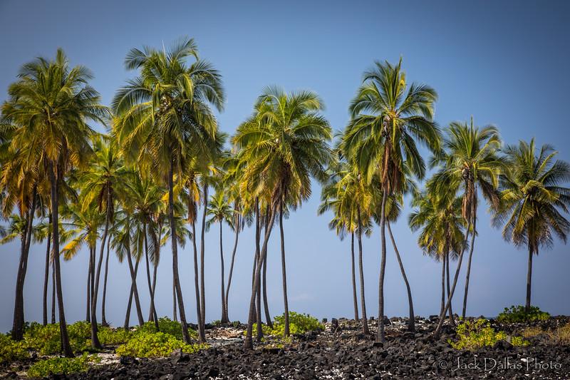 Hawaii DF0A6710.jpg