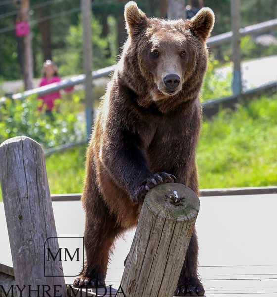 Bjørneparken2017-45.jpg
