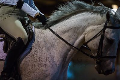 Horse Show Candids