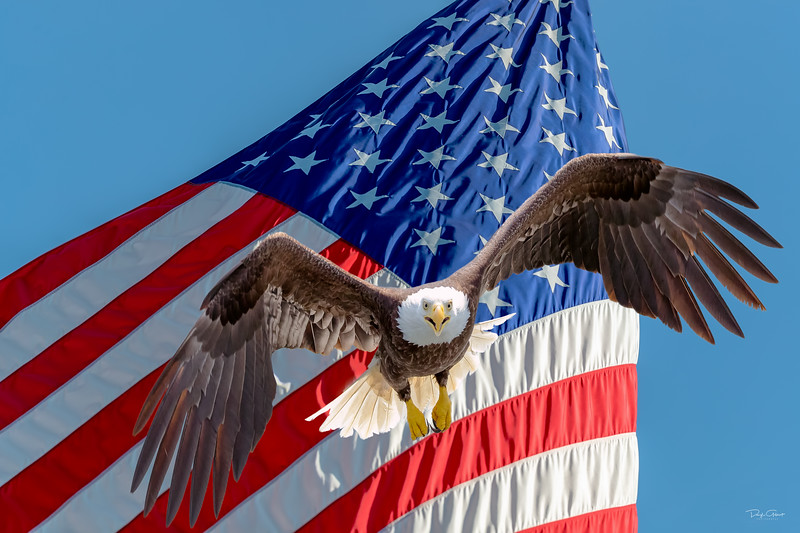 Eagle on US Flag.jpg