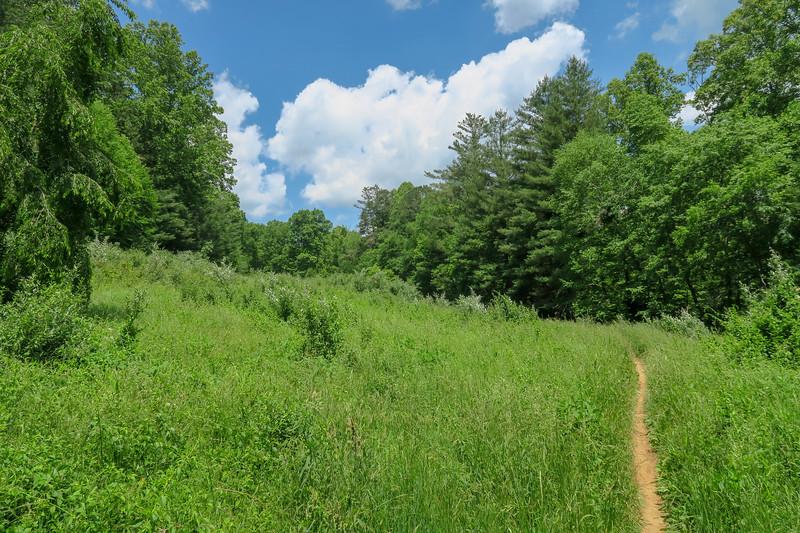 Fletcher Creek Trail -- 2,630'