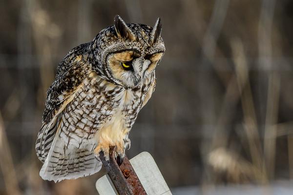 8 Owls 2019