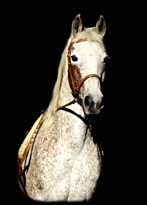 This is Popcon, I beleive named by Christina when she was a tad younger.  He is a half Arab gelding. Not too crazy about me taking his photo!