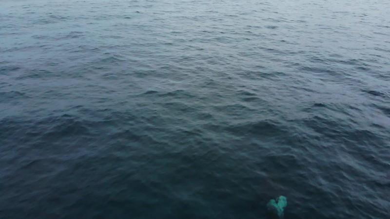 orca_3.mp4