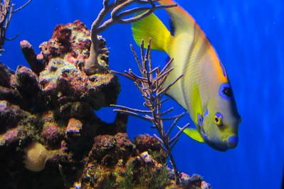 11-21 Birch Aquarium