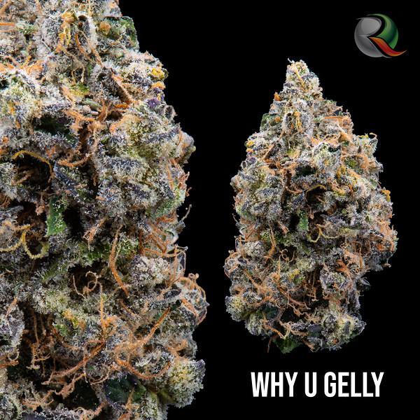 Why u gelly.jpg