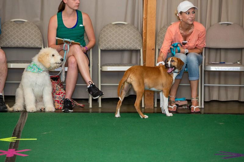 on Command dog Training June 2019-5077.jpg