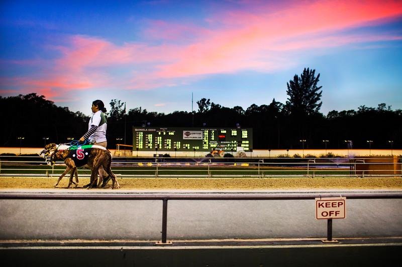 Boston_Commercial_Photographer_Dog_Racing_00012.JPG