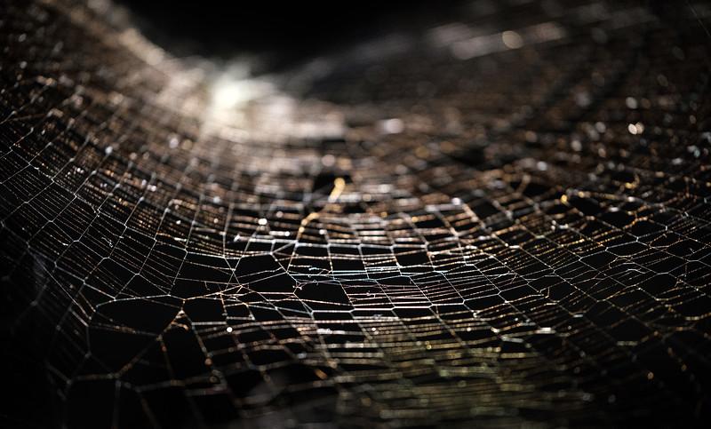 Spider Webs - Saraceno-4.jpg