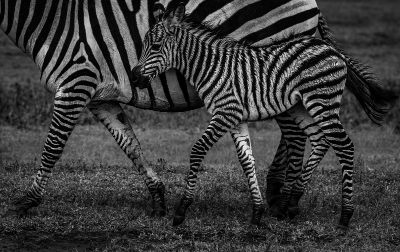 Tanzania_Feb_2018-2.jpg
