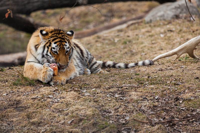 zoo_Apr_2013-33.jpg