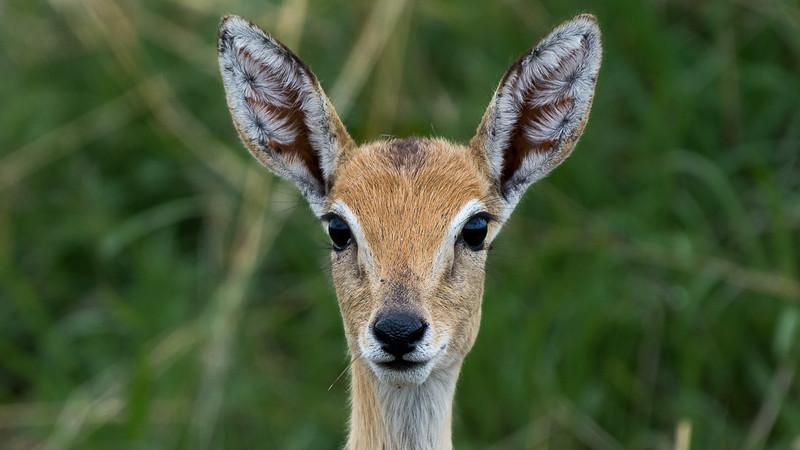 Kenya-0251.jpg