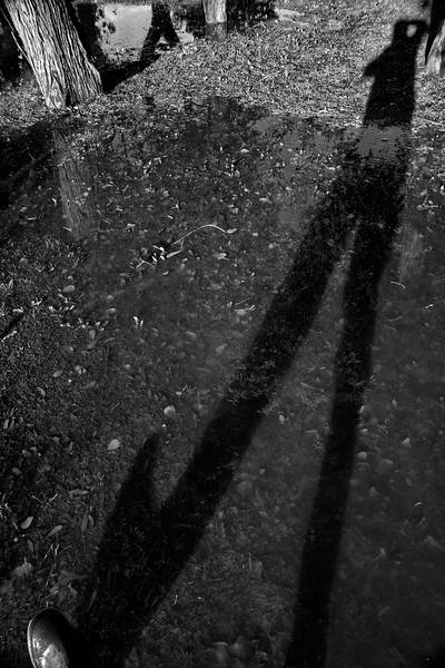 Sombra de bosque