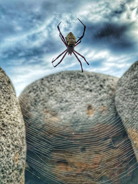 Spider Web