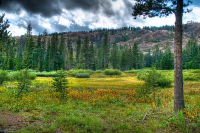 Salmon Lake 2009 - Landscape & Wildflower