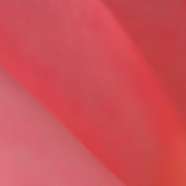 Macro rose pink 0837 SQ
